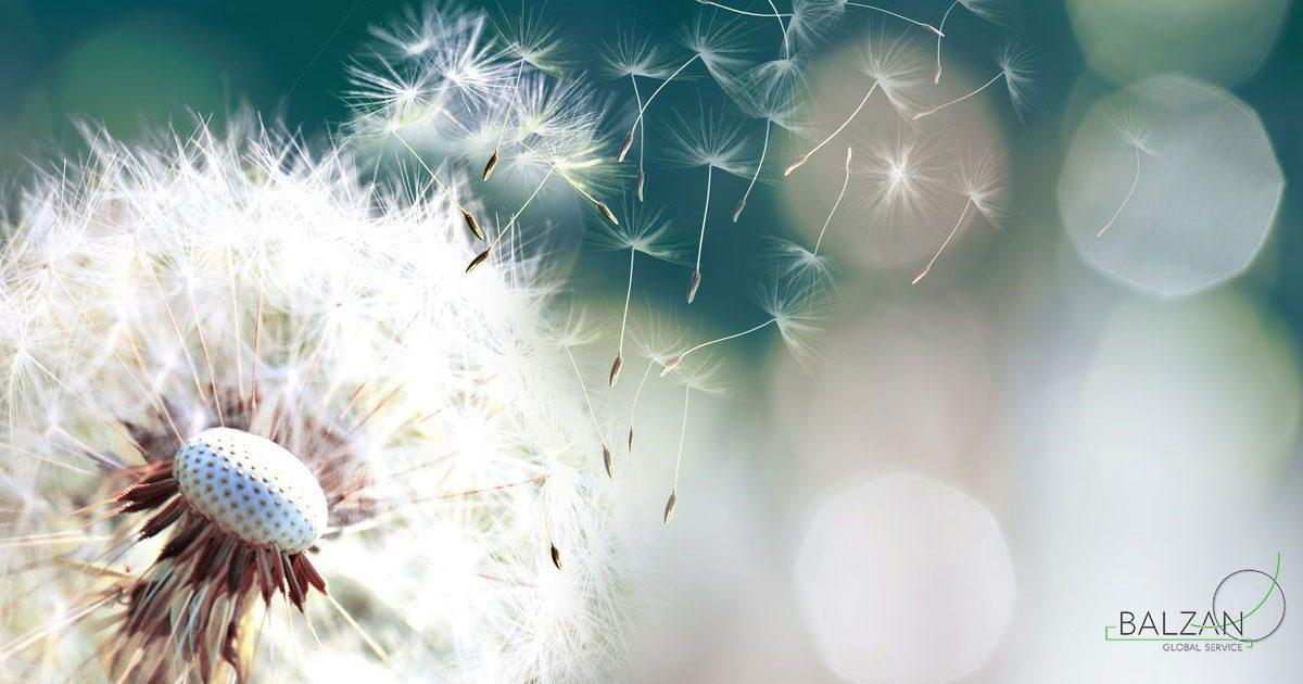 Pulizia uffici – come ridurre i sintomi delle allergie stagionali